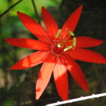 Casa Orquideas Costa Rica Osa Peninsula Osa Tropical