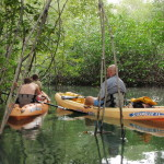 Kayaking in Mangroves and catch fish Osa Peninsula Costa Rica