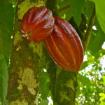 Chocolate Tour Osa Tropical Costa Rica