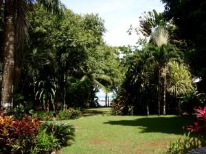 Casa Dulce Matapalo Costa Rica