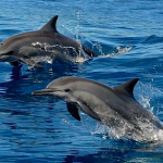 Osa Tropical Dolphin Watching Tour