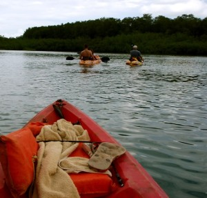 Cheapest and Best Kayak Tours around Puerto Jimenez and the Osa Peninsula