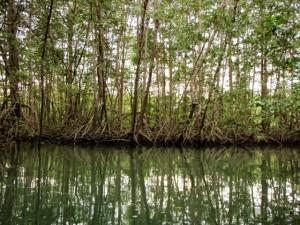 Cheapest and Best Kayak Tours around Puerto Jimenez and the Osa Peninsula
