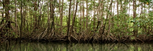 Excursion al Manglar