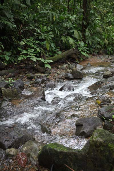 Stream on the Property