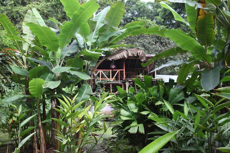 Garden and Cabina