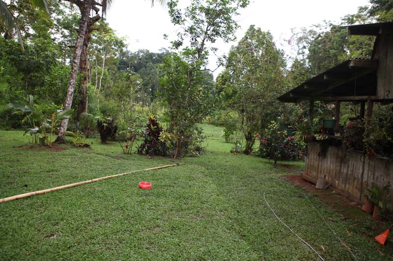 Landscaped area around the property